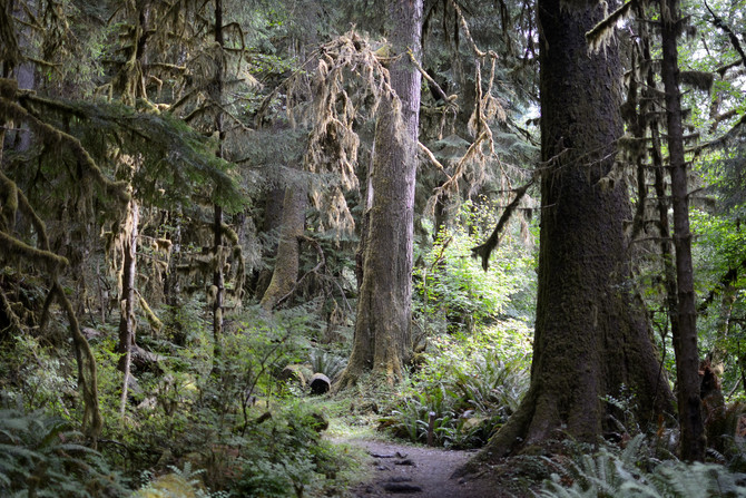 VIDEO: Hiking the Hoh River Trail of Olympic National Park, WA