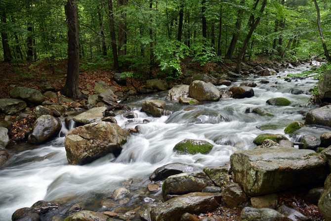 VIDEO: Spring Showers in Harriman State Park