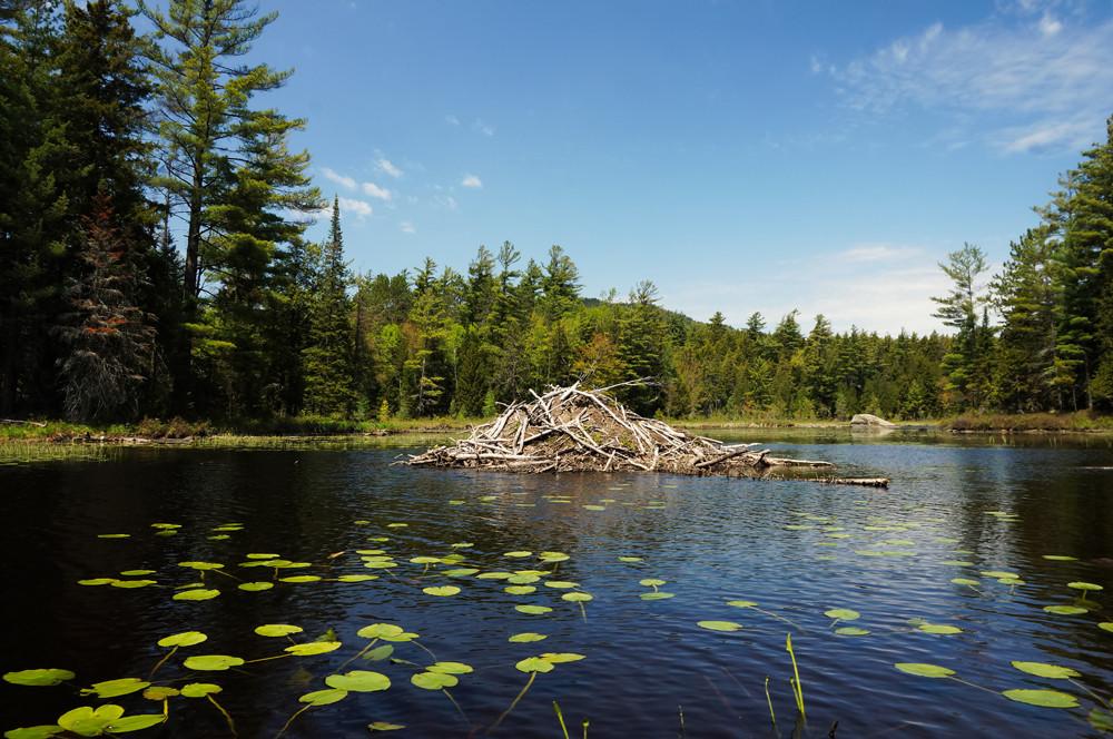 beaver-dam-saranac-river