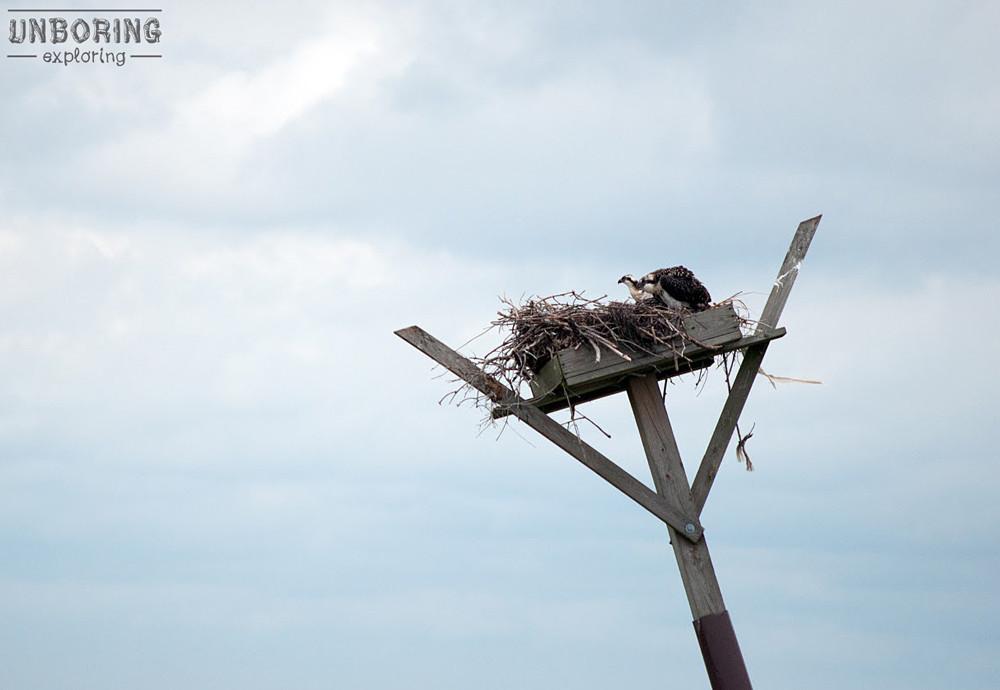 unboring-exploring-osprey-barnegat-bay.jpg