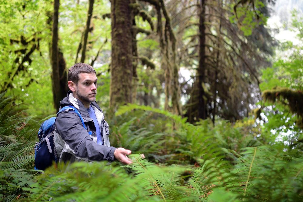 ferns-hoh-rainforest-marek-funny