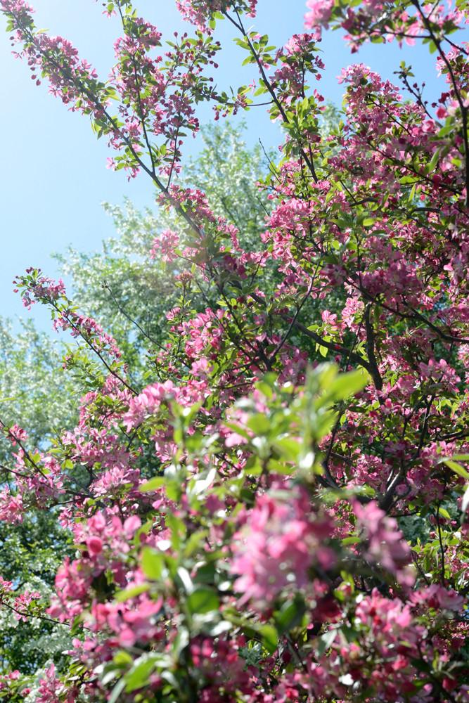nj-botanical-garden-skylands-ringwood-nj