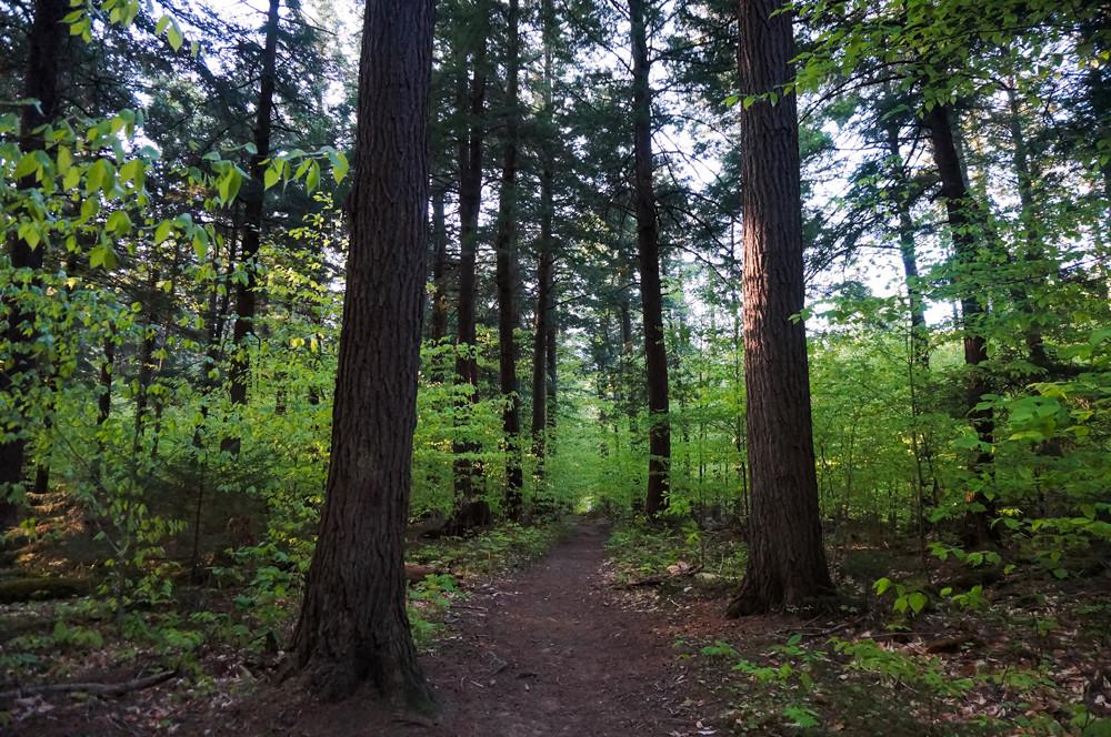 hiking-ampersand-mountain-adirondacks