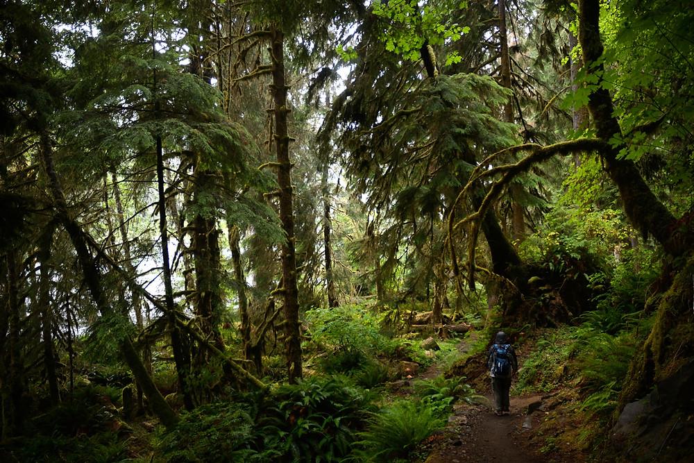 marek-dobrygowski-rainforest-hoh-olympic-wa