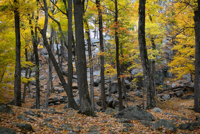 Where to Go: My 4 Favorite Late Autumn Hikes in NY!