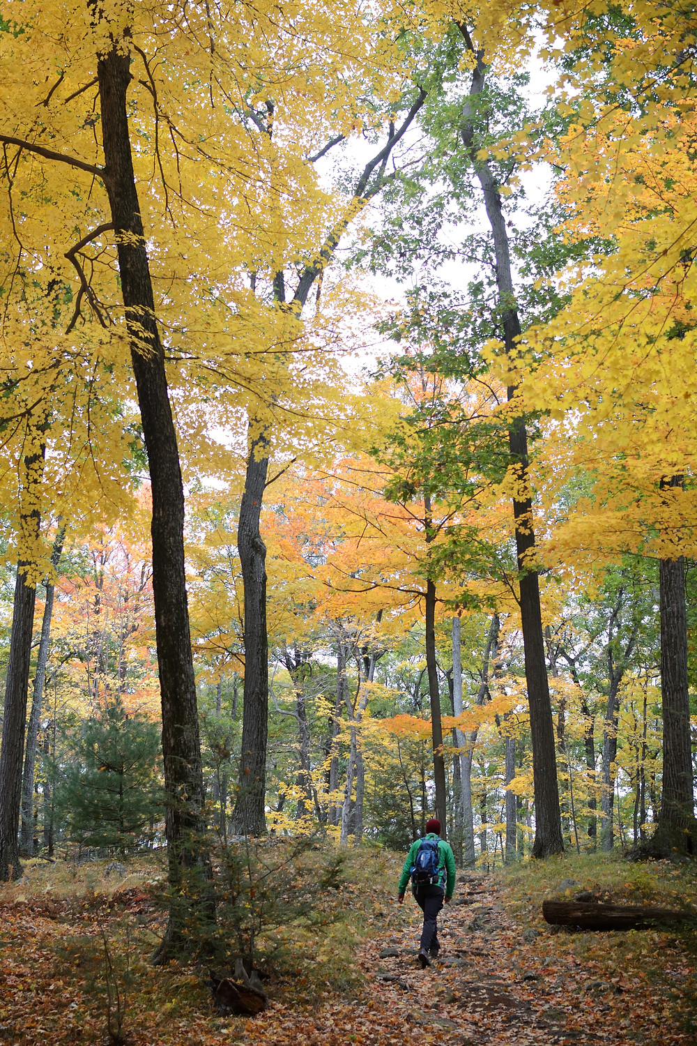 ramapo-dunderberg-trail-harriman-state-park-fall