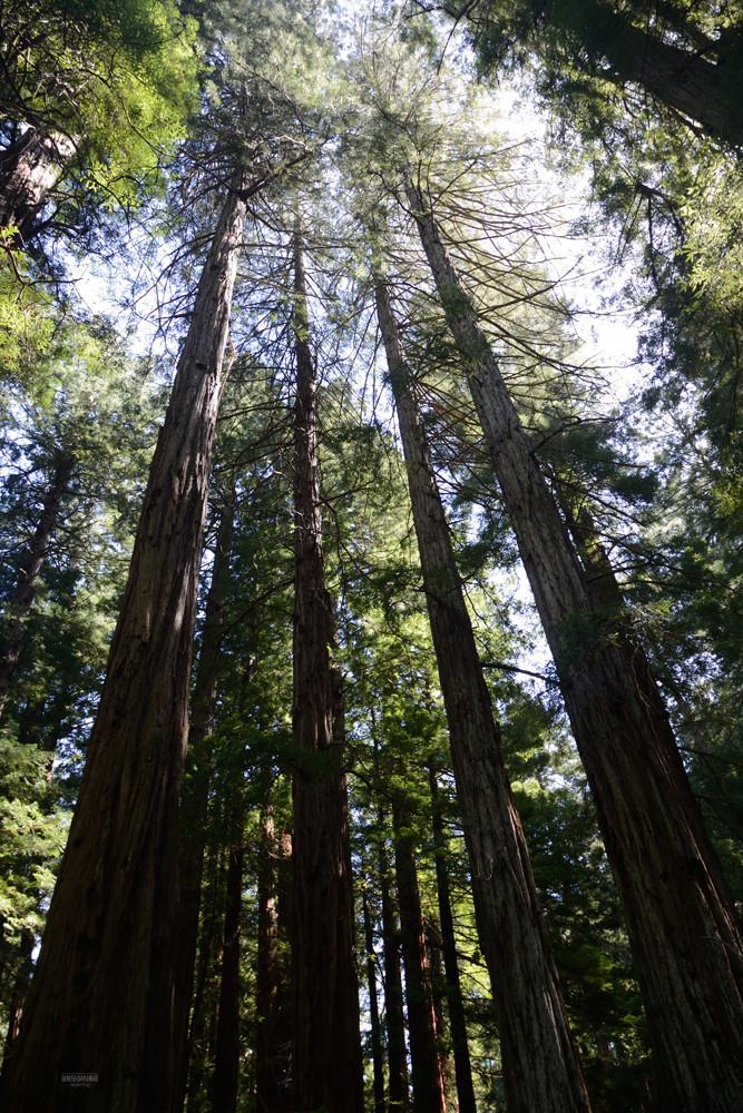 Monumental Muir Woods
