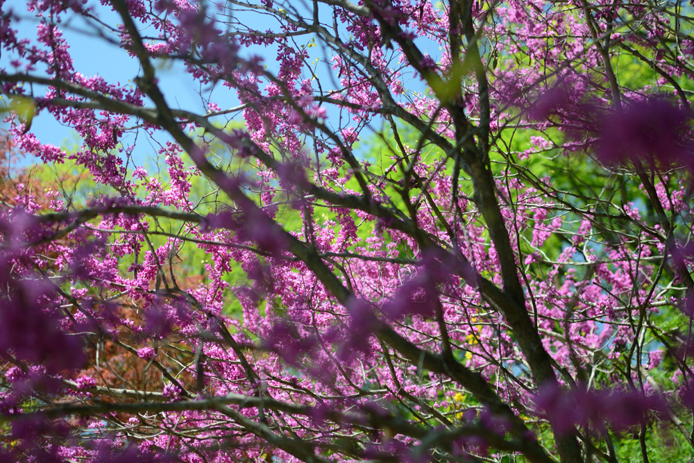 ringwood_spring_0010.jpg