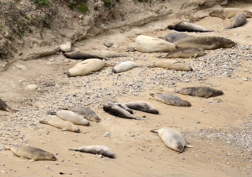 unboring-exploring-point-reyes-national-seashore-chimney-rock-elephant-seals