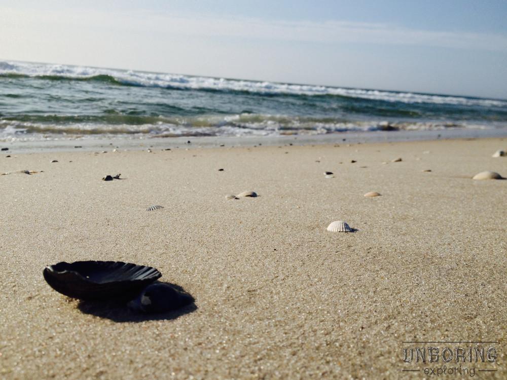 unboring-exploring-lbi-seashells.jpg
