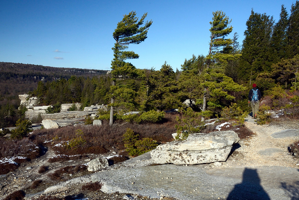 shawangunks-pitch-pines-gertrudes-nose-hike