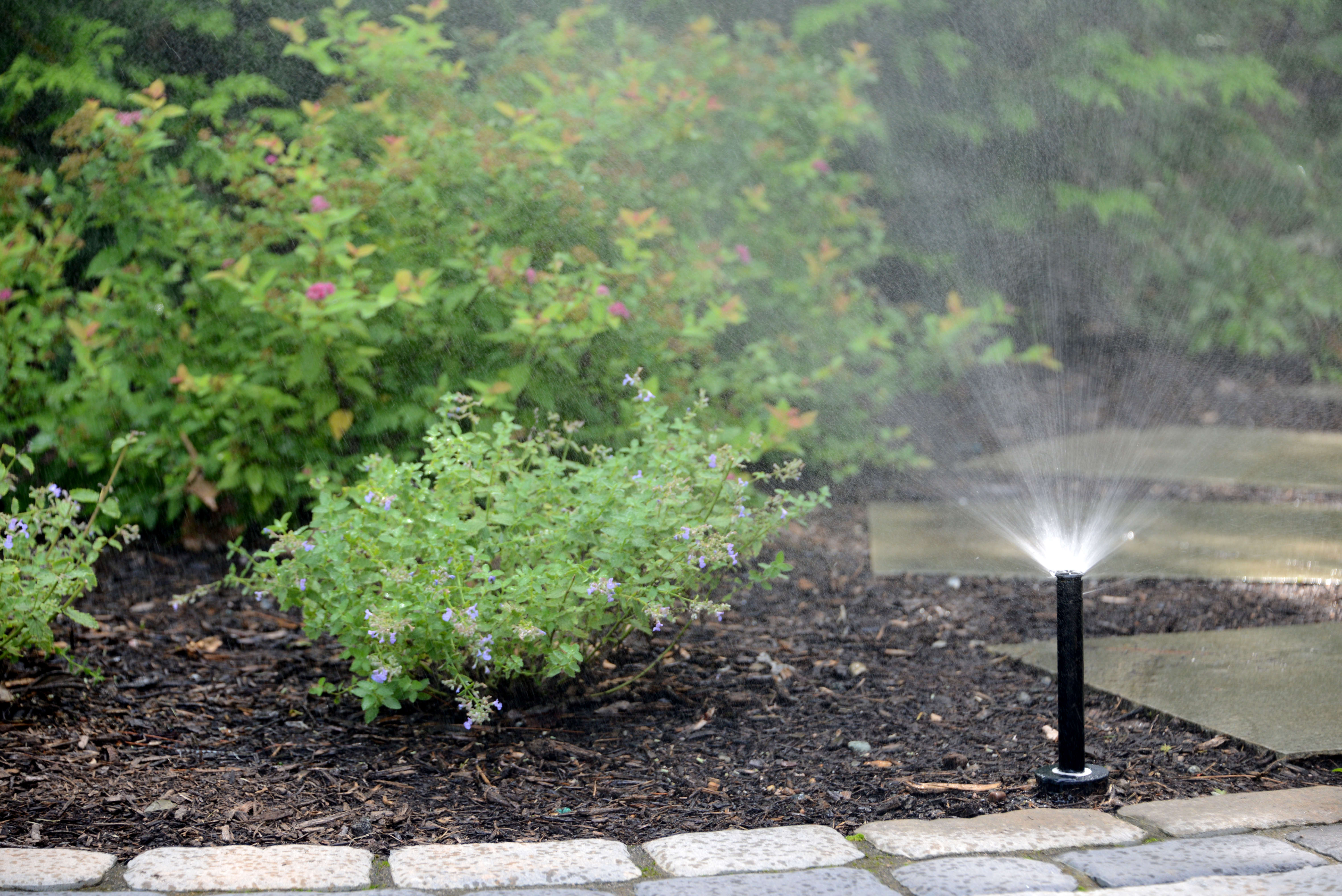 Sprinkler system with plantings