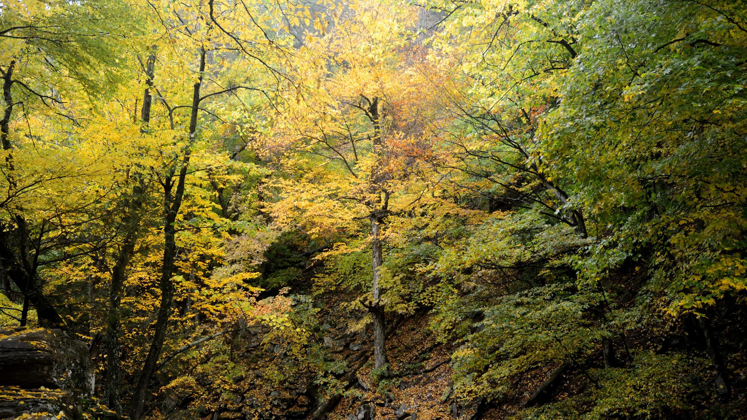 Fall in Kaaterskill Clove