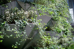 Vertical plantings
