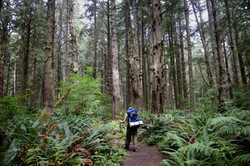 Backpacking the Olympic Coast