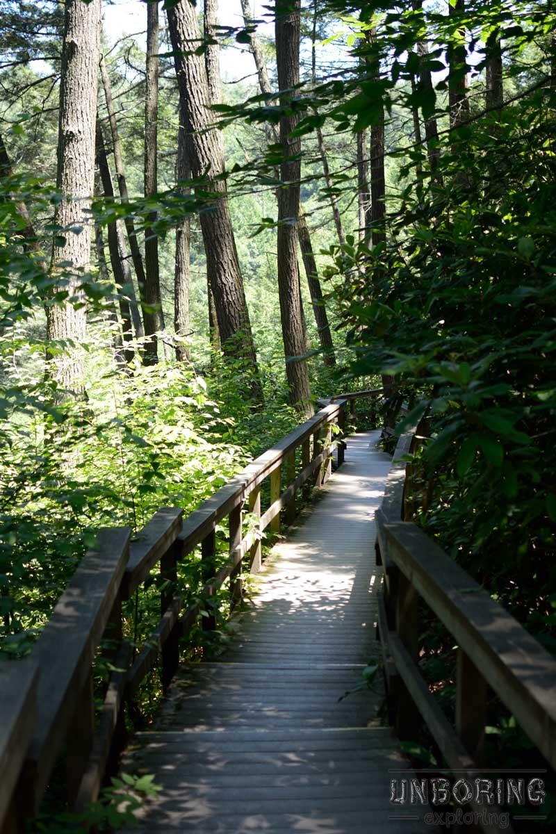 The boardwalk trail