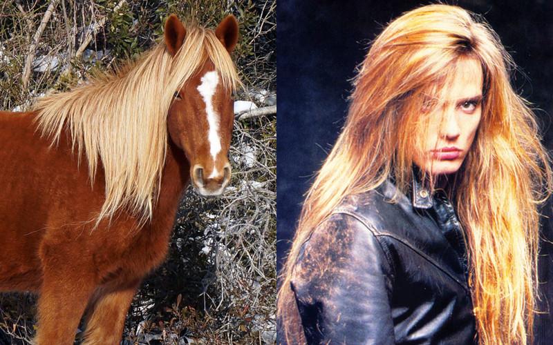 skid-row-assateague-wild-horses
