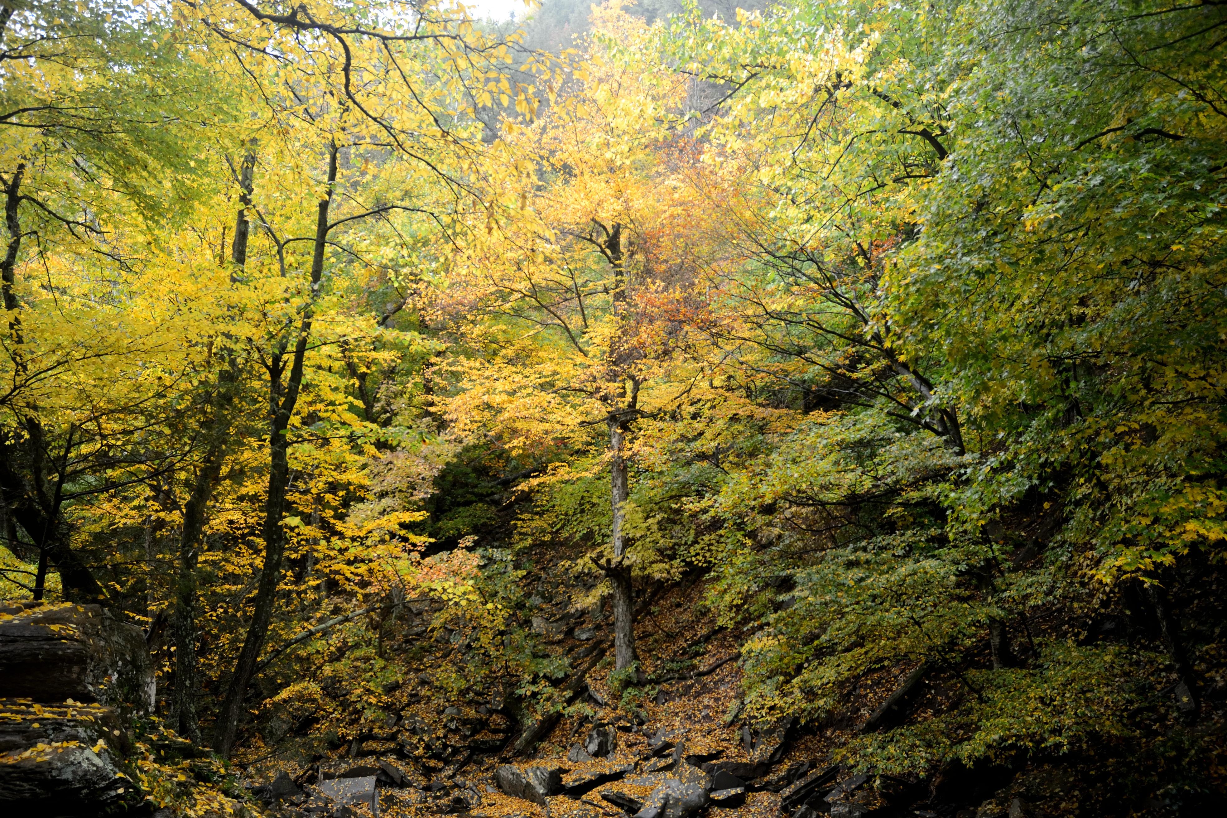 Fall Foliage in Kaaterskill Clove
