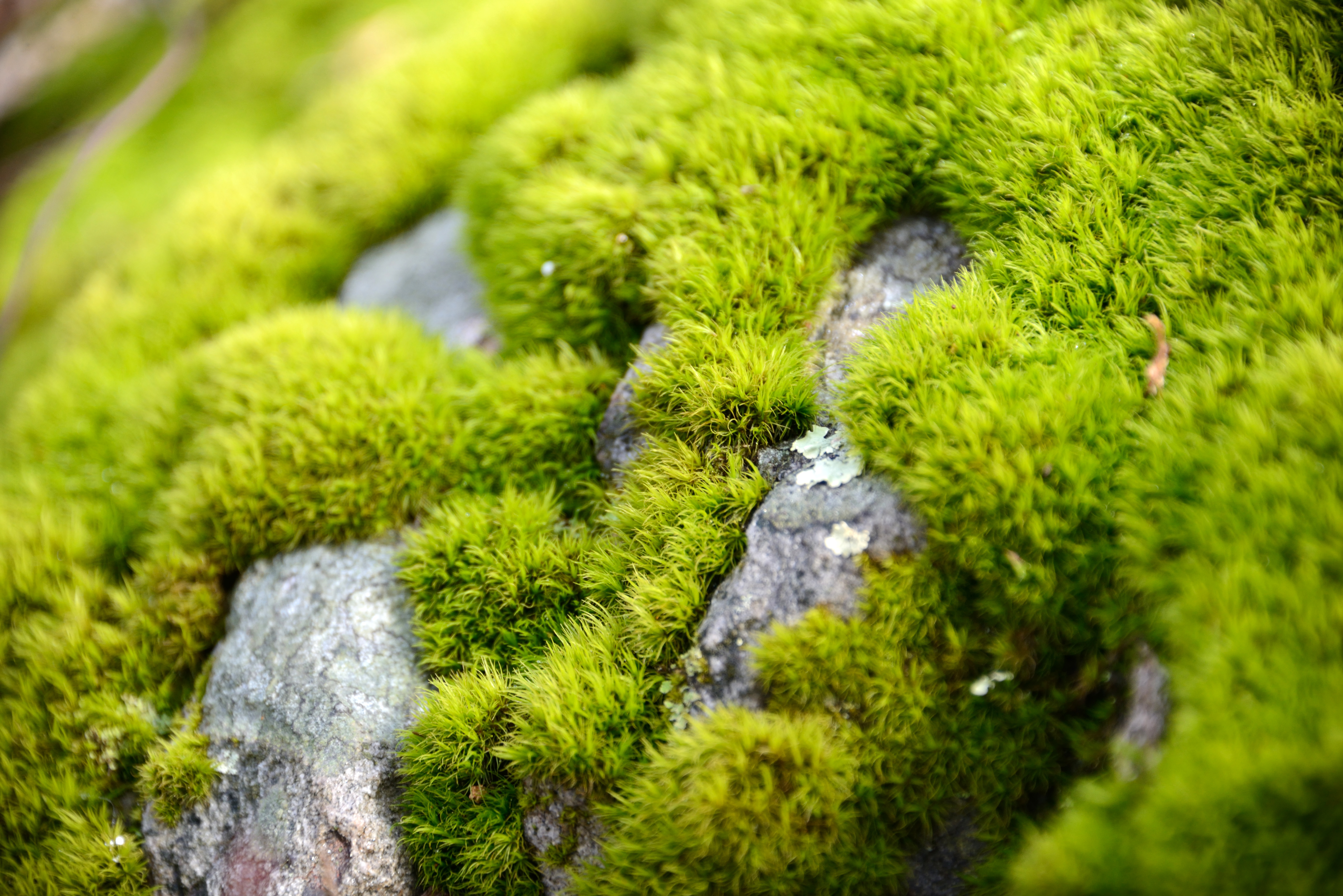 Mossy Details