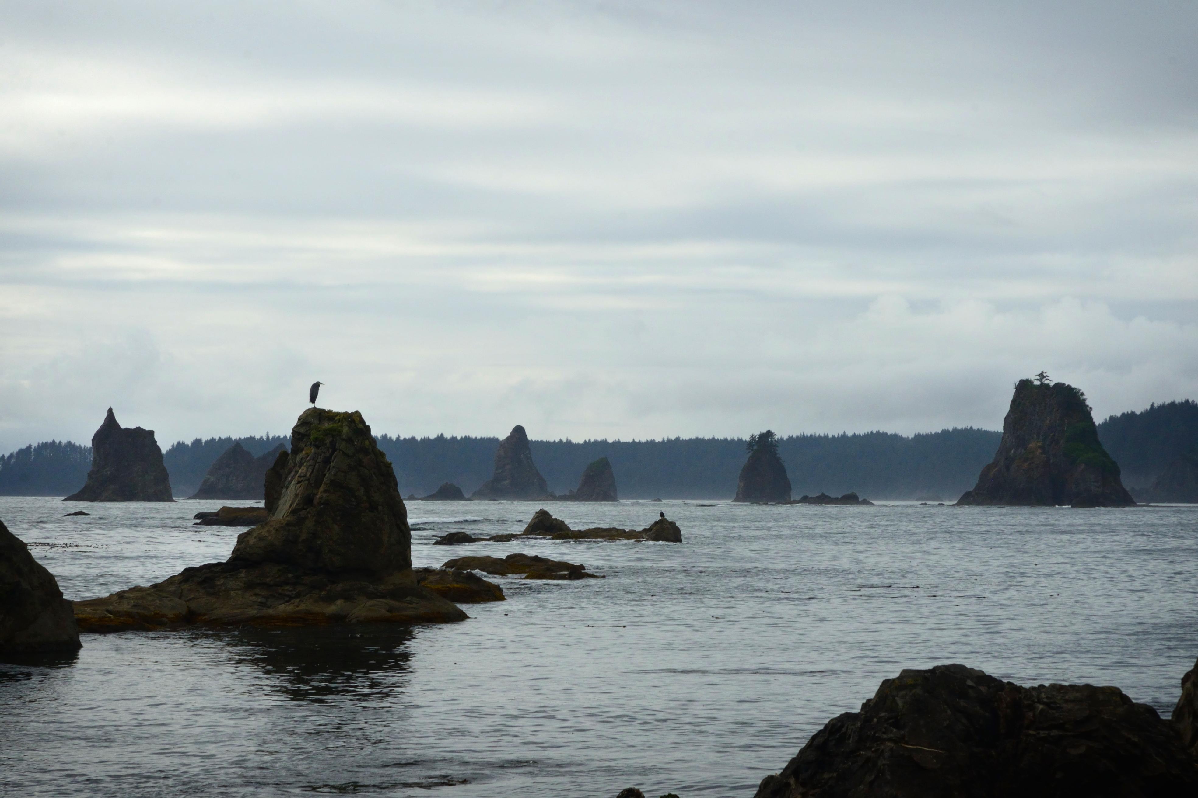 The Wilderness Coast