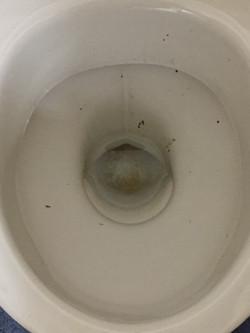 Office Toilet Renovation
