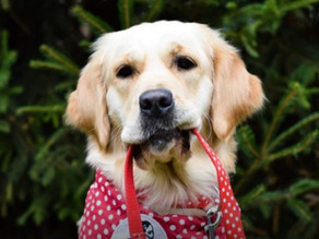 Starbucks Supports Therapy Dogs in Hungary