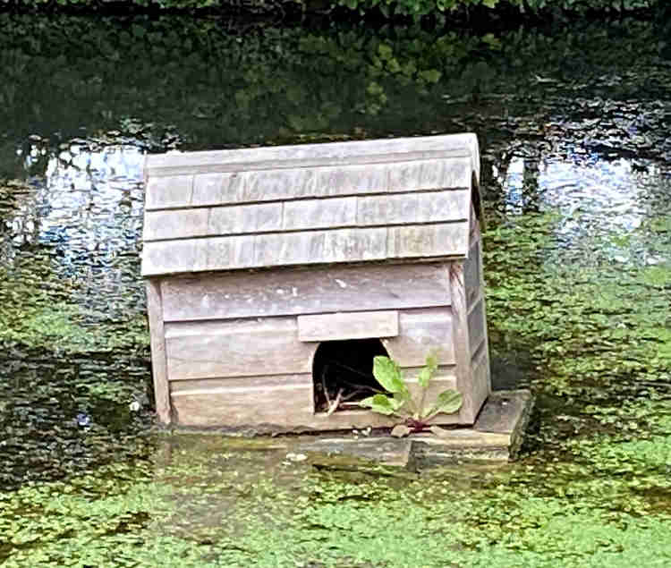 A floating house on a pond that seems to be sinking