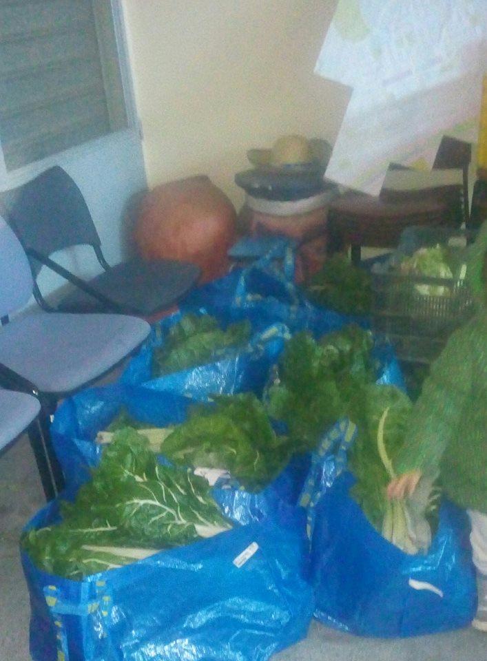 cestas 5 diciembre