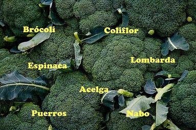 brocolii.jpg