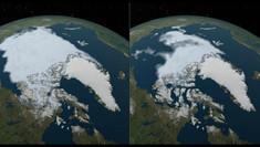 Olas de calor en Antártica y sus efectos en ecosistemas marinos