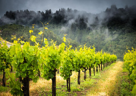 RRV_Vineyards_2019-7.jpg