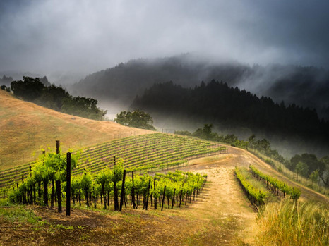 RRV_Vineyards_2019-8.jpg