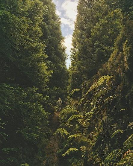 Trekking nel verde di Sete citades
