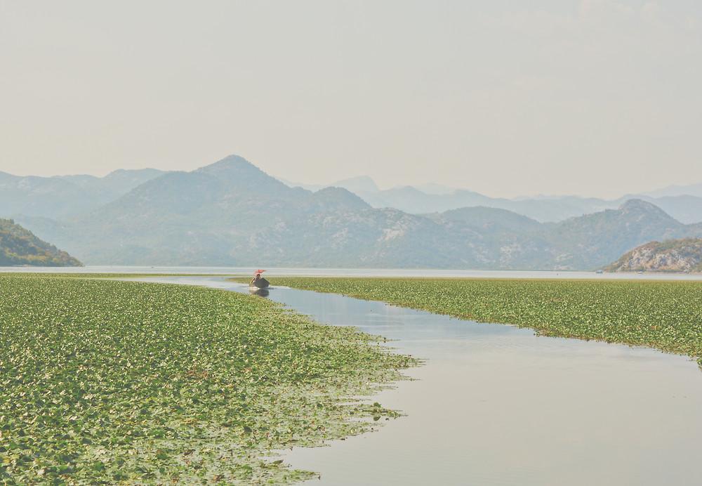 una barca naviga il lago scutari in Montenegro