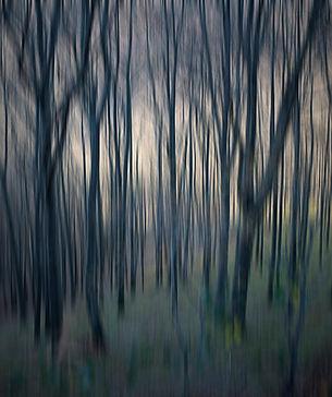32_La_forêt_dense.jpg