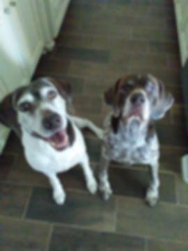 Houston Dog Walking & Pet Sitting | Happy Pups!