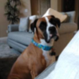 Houston Pet Sitting | Missouri City Pet Sitting