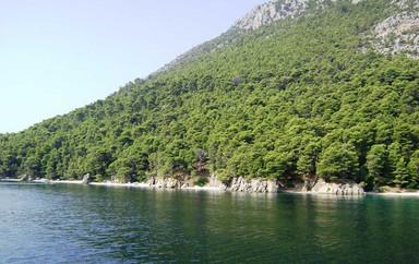 kalamos-forest-viewjpg