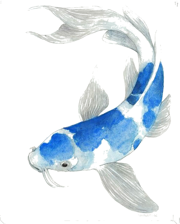 blue-koi-fish-ii-wrapped-canvas-giclee-a