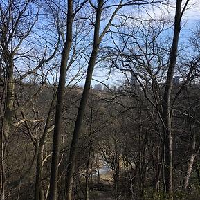 Yellow Creek Ravine (looking South).JPG