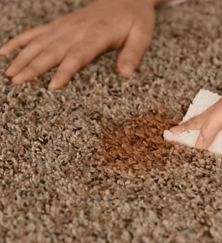 Removing-Mold-from-Brown-Rug.jpg