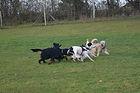 chiens en récréation