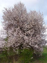 marusticano-fiore.jpg