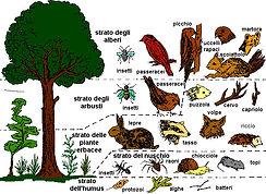 mondo_animale_nel_bosco.jpg