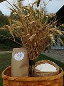 farina tipo 1.png