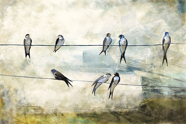 Birds Painted on A Wire, Swallows, Painting, Brush Strokes, Illusration, Design