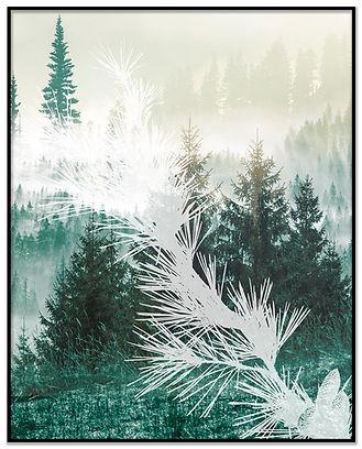 pine tree.jpg