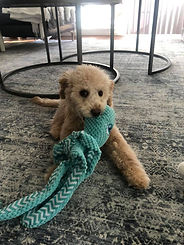 Lucky with toy.jpg