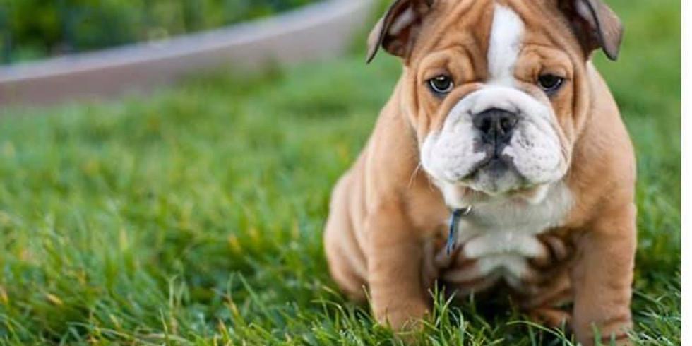Love Yourself w/Puppy Yoga