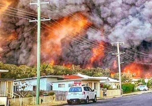 Australie: le pays en feu, des milliers d'animaux morts et des centaines de maisons détruites.